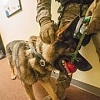 CID, K-9 units begin partnership